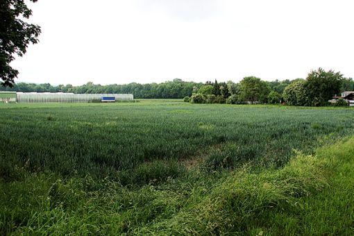 In Otterbach Süd bis zur Landesgrenze soll mittelfristig ein Mischgebiet mit überwiegendem Wohnanteil auf zehn Hektar entstehen.   Foto: Siegfried Feuchter Foto: Weiler Zeitung