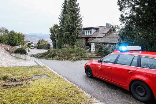 Ein auf die Straße gestürzter Baum blockierte den Lettenweg. Foto: Kristoff Meller