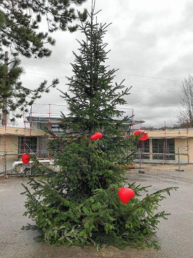 Die Tanne auf dem Schulhof. Foto: zVg/Christine Aniol