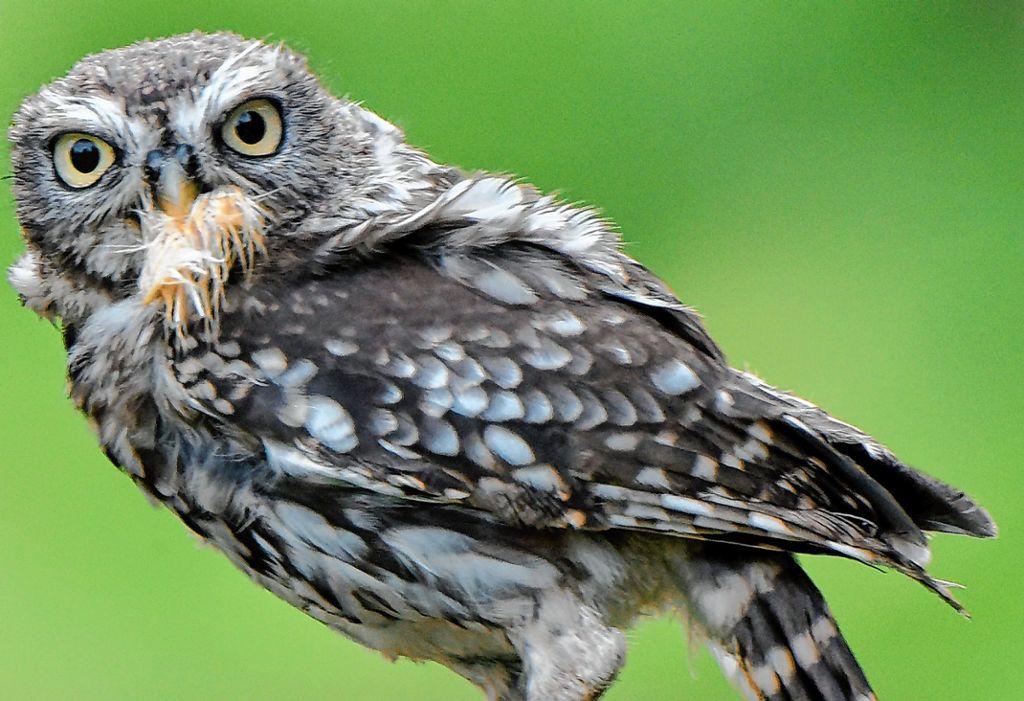 vogel bild heimische vogel hohlenbruter