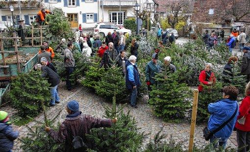 Schliengen hochbetrieb beim weihnachtsbaum verkauf - Obi weihnachtsbaumverkauf ...