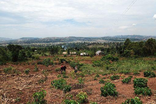 """Dieses Grundstück hat der Verein """"Rainbow House of Hope""""  erwerben können.  Dort  soll zunächst Gemüseanbau betrieben werden. Später sollen  die Lehrlingscontainer  vom jetzigen Standort in Kampala dort aufgestellt werden - die Slumentwicklung führt nach außerhalb der ugandischen Hauptstadt.   Fotos: zVg Foto: Markgräfler Tagblatt"""