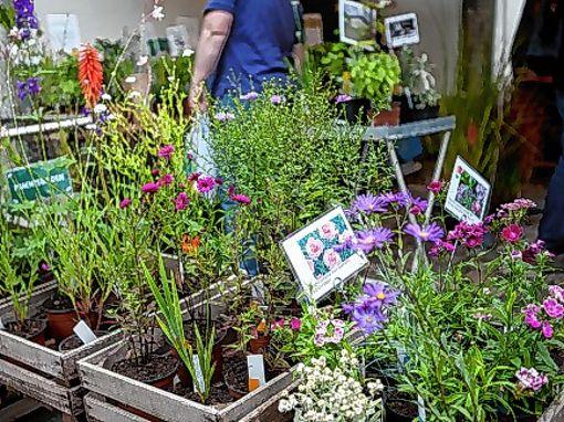 Manche Pflanzen lieben die kalte Jahreszeit.   Foto: zVg Foto: Die Oberbadische