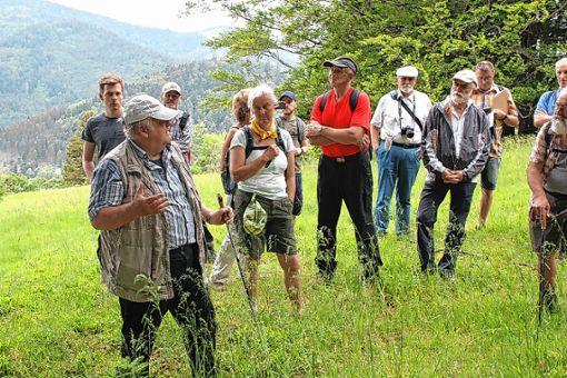 Werner Störk verdeutlichte bei der Exkursion, welche Bedeutung die Holderschanze einst hatte.        Foto: Christoph Schennen Foto: Markgräfler Tagblatt