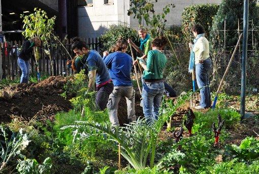 """Kein Raum für Individualisten: Beim """"Urban Gardening"""" steht die Gemeinschaftsarbeit im Vordergrund.  Fotos: zVg Foto: Die Oberbadische"""