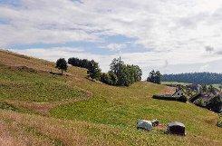 Der südliche Bergkopf – ein altes Bergbaugebiet mit Halden, Stollen und Pingen.  Foto: Werner Störk Foto: Markgräfler Tagblatt