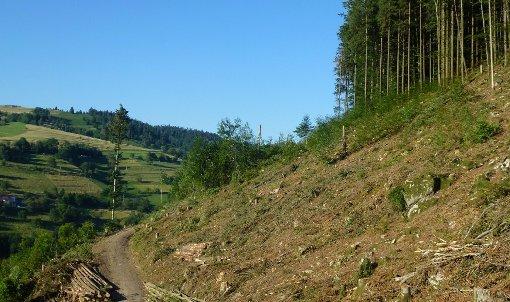 Holzfällarbeiten stießen beim Nabu Lörrach auf Unverständnis. Auch sei die Brutzeit nicht berücksichtigt worden.  Foto: Archiv/zVg Foto: Die Oberbadische