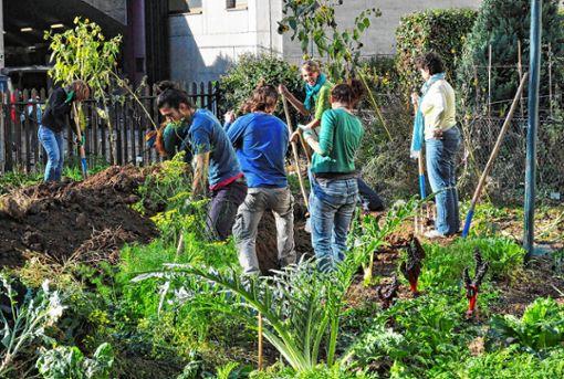 Beim Gärtnern auf dem Landhofareal wird Gemeinschaftsarbeit großgeschrieben.   Foto: zVg Foto: Die Oberbadische