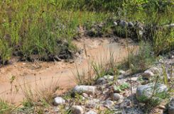 Flache Gewässer sind ideale Laichtümpel für Gelbbauchunken. Foto: Weiler Zeitung