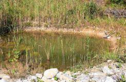 Ein Tümpel bei der Weißerdegrube auf dem Heuberg in Kandern, wie Frösche ihn mögen. Foto: Weiler Zeitung