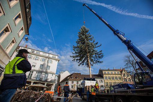 Der Lörracher Weihnachtsbaum auf dem Alten Markt wurde am Freitagvormittag aufgestellt. Foto: Kristoff Meller Foto: Kristoff Meller