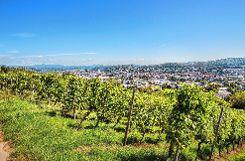 Blick ins Tal  über die Tüllinger Reben   Foto: Krostoff Meller Foto: Die Oberbadische