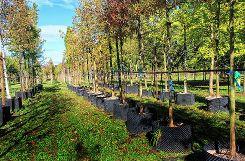 Die Basler Stadtgärtnerei und eine eigene in Arlesheim beheimatete Baumschule sorgen dafür, dass das Stadtgrün auch in Zukunft den Anforderungen gewachsen ist.     Fotos: Gerd Lustig/Michael Werndorff Foto: Die Oberbadische