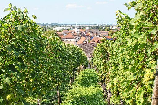 Der Weinort Auggen liegt umgeben von Reben – hier der Blick von der Kreuzkirche hinab auf das Dorf.   Fotos: Claudia Bötsch Foto: Weiler Zeitung