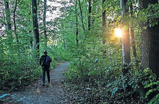 Der Wald ist immer öfter auch Erholungsraum und Ort der Freizeitgestaltung. Foto: Wilhelm Mierendorf