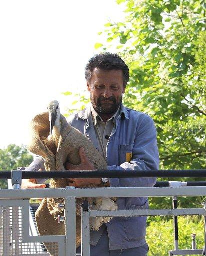 Bilanziert: Bruno Gardelli ist Regionsleiter Nordwestschweiz von Storch Schweiz und Tierpfleger im Zoo Basel.  Foto: zVg Foto: Die Oberbadische