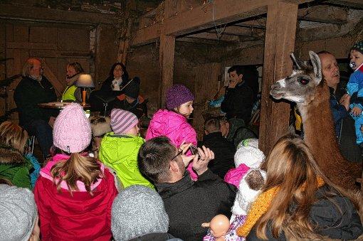 Mensch und Tier bei der Stallweihnacht auf dem Weitenauer Fahrnbuck.  Foto: Ines Bode Foto: Markgräfler Tagblatt