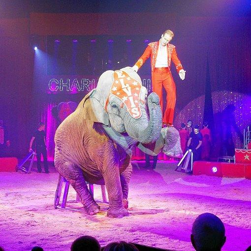 """Der """"Elefantenflüsterer"""" Elvis Errani ist eine der Attraktionen vom Zirkus Charles Knie, der vom 21. bis 22. September in Rheinfelden gastiert.  Foto: zVg Foto: Die Oberbadische"""