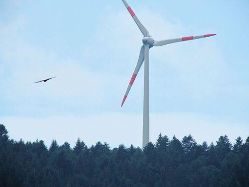 Unter anderem geht es bei den aktuellen Untersuchungen zum Windpark Wasen/Hohe Stückbäume um das Thema Greifvögel. Foto: Archiv