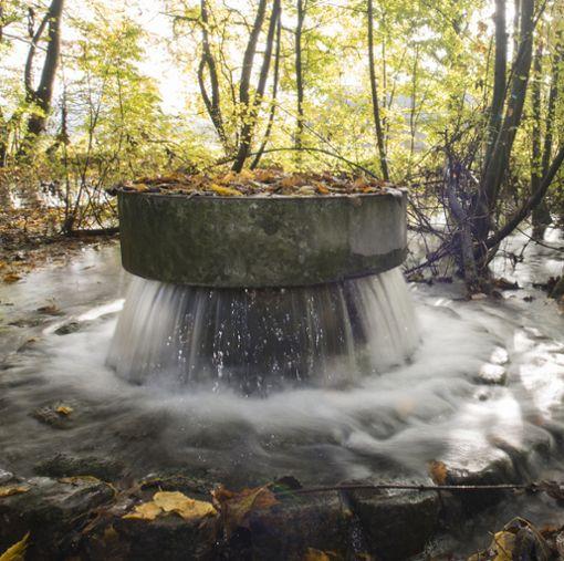 Waldboden sorgt für eine biologische Reinigung des Rheinwassers.    Foto: zVg/IWB Foto: Die Oberbadische