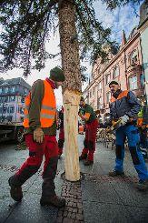Der Lörracher Weihnachtsbaum auf dem Alten Markt wurde am Freitagvormittag aufgestellt. Foto: Kristoff Meller Foto: mek