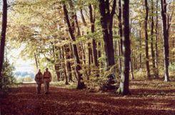 Der Wald dient auch als Naherholungsgebiet.   Foto: Archiv Foto: Markgräfler Tagblatt