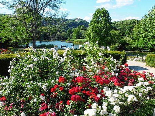 Blick in den Lörracher Grüttpark   Foto: zVg Foto: Die Oberbadische