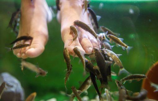 Die Fische lassen es sich schmecken.  Foto: Kristoff Meller Foto: Die Oberbadische