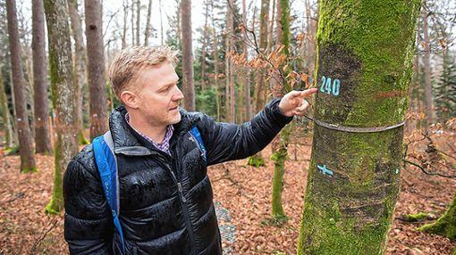 Die Forscher um den Basler Pflanzenwissenschaftler Professor Ansgar Kahmen haben die einzelnen Bäume auf der Versuchsfläche nummeriert und mit einem Dendrometerband versehen, das die Zunahme des Baumumfangs misst.   Foto: zVg/Uni Basel Foto: Die Oberbadische