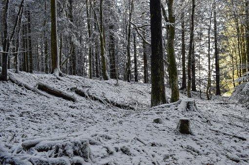 Gräben und Wellen im Gelände zeugen von einer kriegerischen Vergangenheit im Markgräflerland. Foto: Michael Werndorff