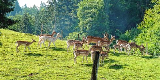 Der Tierbestand des Zeller Wildgeheges soll demnächst etwas reduziert werden.   Foto: Archiv Foto: Markgräfler Tagblatt