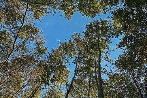 Die Betriebsplanung für den Kanderner Stadtwald für 2018 wurde vorgestellt.    Foto: Kristoff Meller Foto: Weiler Zeitung