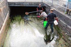 Mehrere hundert Fische und andere Lebewesen barg der Angelsportverein aus den Kanälen in der Stadt.    Fotos: zVg Foto: Markgräfler Tagblatt