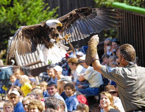 Flugshows gehören zu den Attraktionen des Vogelparks.  Foto: zVg Foto: Markgräfler Tagblatt