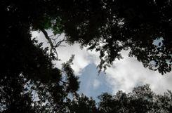 Auf Gewinn um jeden Preis will die Gemeinde Steinen bei der Waldnutzung in den nächsten zehn Jahren verzichten.   Foto: Harald Pflüger Foto: Markgräfler Tagblatt